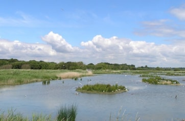 View of South Scrape from Meon Shore Hide.