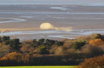 Large Flock of waders on the Dee Estuary (and a paraglider!)