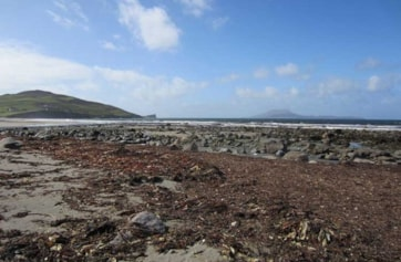 The beach at Carrowmore - good for roosting waders.