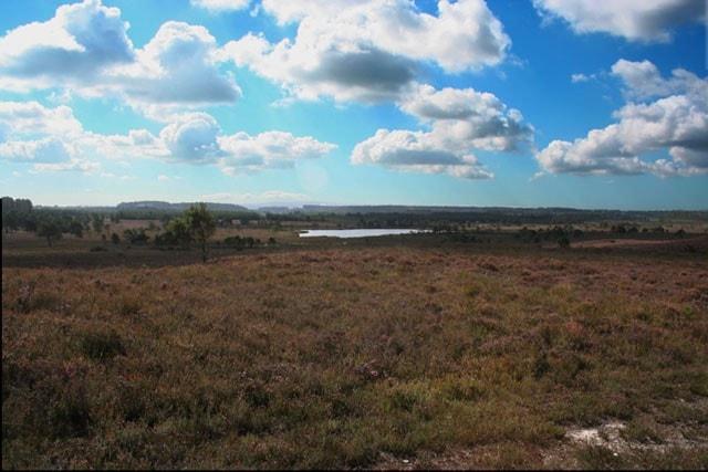 Morden Bog looking south towards Decoy Pond.