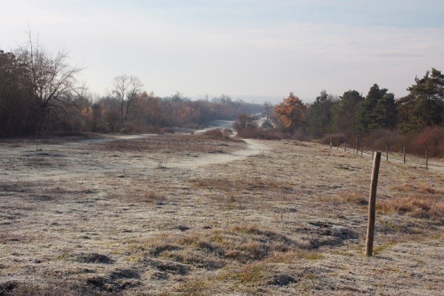 A frosty Headley Heath.