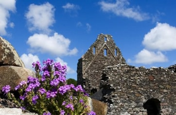 Glenluce Abbey - home to nesting Oystercatcher, Blue Tits, Jackdaws, Crows, Swallows House Martins and many others.  Also a great spot for wild flowers such as Fairy Foxglove.