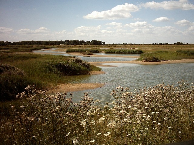 From Tennyson's Hide south