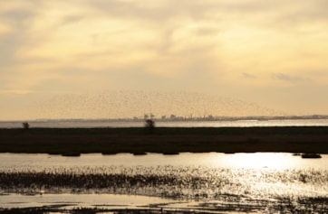 View across the Humber South West towards Immingham. Flocks of waders, including many Golden Plover.