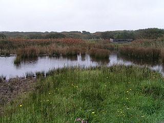 Lower Moors from Hilda Quick Hide (showing ISBG hide).
