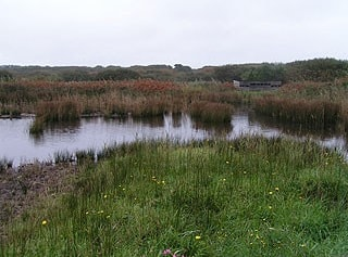 Lower Moors from Hilda Quick Hide (showing ISBG hide).