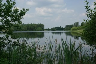 A summer view - not many waterfowl at the moment but lots of other wildlife