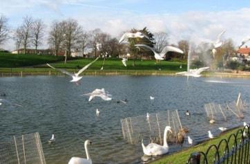 Marine Lake, Prom Park, Maldon.