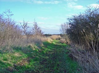Exminster Marshes is a collection of water meadows criss-crossed by dykes, ditches and ponds and this view is typical of the site.