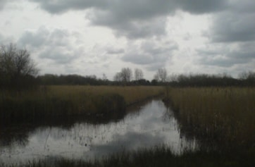 From the Drewer Hide.