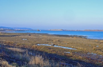 The seaweed covered rocks in middle foreground is an excellent roost for waders at high tide. It is located on the foreshote of the old Yelland Power Station, between the main jetty and the fuel jetty seen in the background. In the far distance is Cr