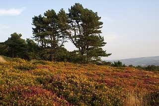 North Hill above Minehead
