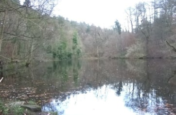 Mixed wood in valley behind castle. Mill pond and stream. Usual woodland species, plus kingfisher/dipper/heron regularly seen.