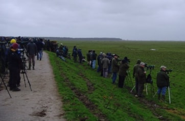 A large crowd waiting to see a Little Blue Heron... that unfortunately failed to show on this date.