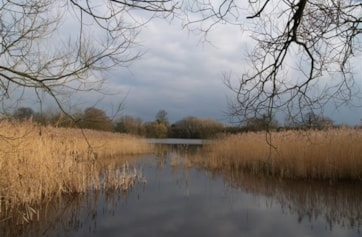 View from hide at Saltmarshe Delph's main pond.