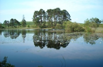 One of the Lowes Lochs. Good for Otters.