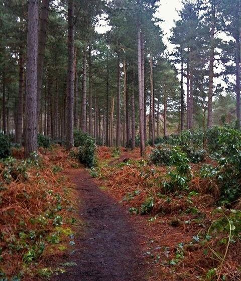 Wheldrake Woods.