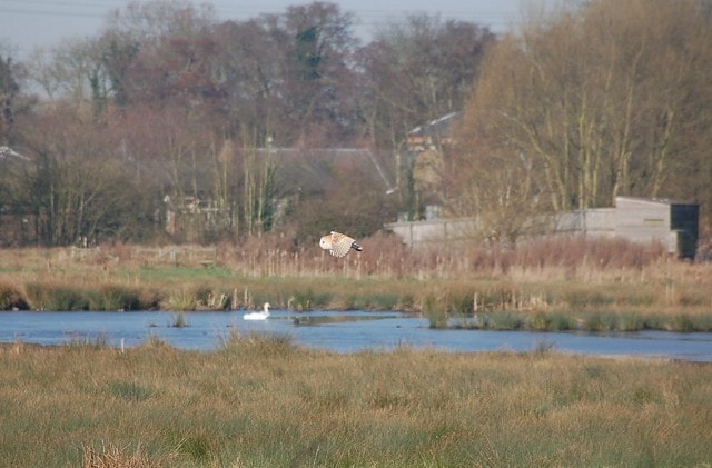 Picture of Cornmill Meadow part of the Lea Valley country park.