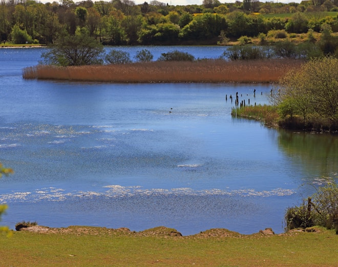 Old gravel pits that has been turned into a country park, many water birds.