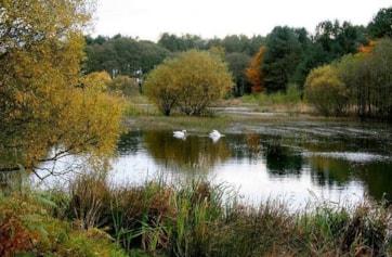 Morton's Loch, Nr Tayport.