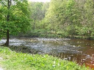 River Wharfe through Strid Woods