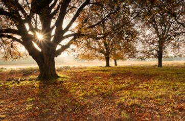 """Autumn in Richmond Park is a joy to behold. Conisdering how close it is to central London, it defines the world """"oasis"""" with it's abundance of wildlife and natural beauty."""