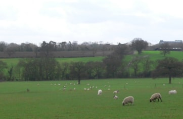 Folly Farm.