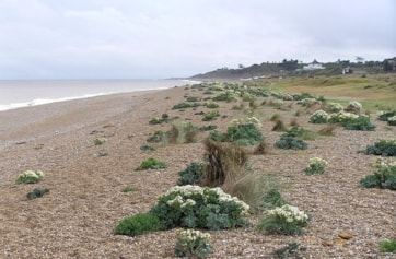 Sizewell beach view towards Thorpeness.