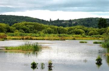 North part of Morton's Loch, Nr Tayport.