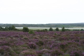General view across heath on Birdwatchers' Trail