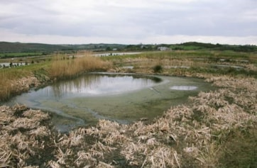One of the waste-treatment pools at Kilmeaden