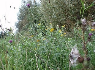 Goldfinch territory - track off Colehouse Lane