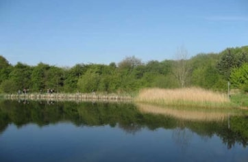 The Great Reed Warbler site at Straw's Bridge Ponds.