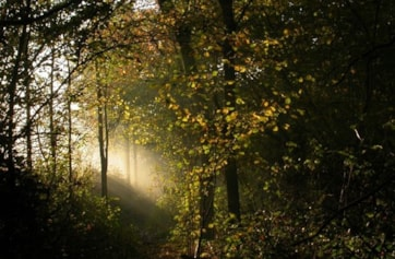 Early mornings in autumn in Perivale Wood often result in beautiful mists.
