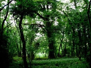 On the Woodland Trail - Swell Woods - West Sedgemoor
