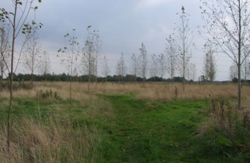 Yoxall Meadow Woods.