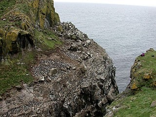 Some of the seabird colony on Lunga.