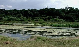 Main view from hide 2. Taken in July.