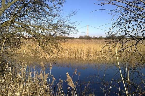 Looking towards the Humber Bridge from the path to the river, near the old visitor centre.