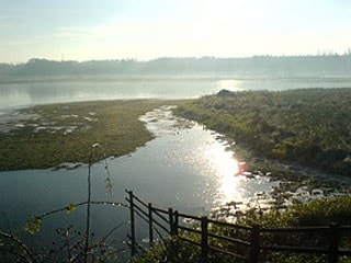 View from Wath Ings Hide, frosty November morning