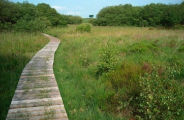 The boardwalk, an excellent place to stake out fritillaries and odonata.