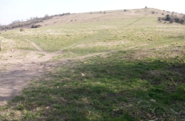 The Paddocks Slope is the first encountered if you enter the site from Half Moon Lane. Ring Ouzel like to use it as they can see any danger approaching from a long distance. It is well worth scanning carefully across the slope before venturing on to