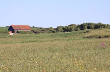 View from the north over a wildflower meadow towards the visitor centre.