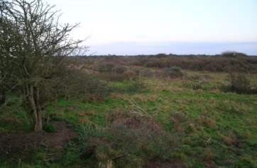 Typical Buckthorn scrub at the northern end of the reserve.