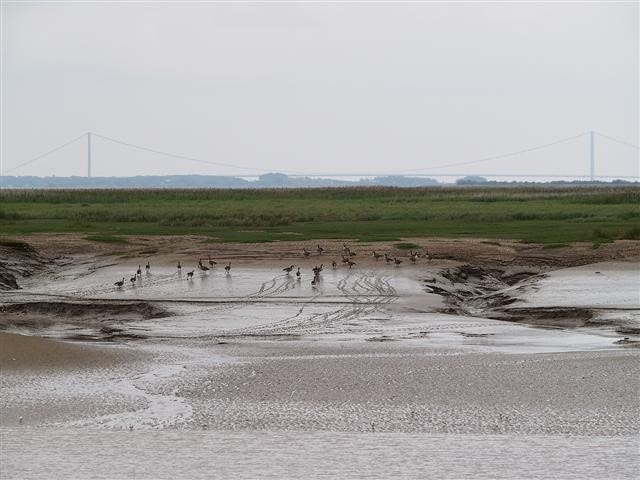 View of Whitton Sand from north bank of River Humber.