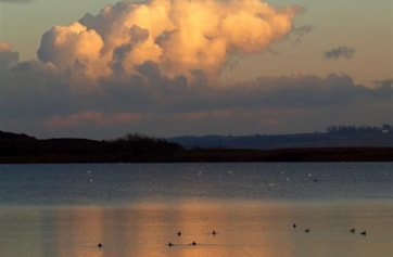 Late afternoon at Welton Water's large lake with Mute Swans, Tufted Ducks, etc..