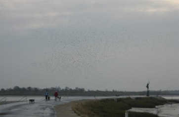 The end of the Prom (Golden Plover in sky).