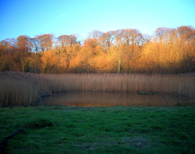 Forest Farm Nature Reserve Cardiff.