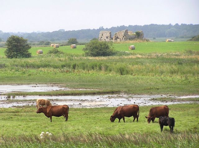 Old Abbey ruins at Minsmere Levels.