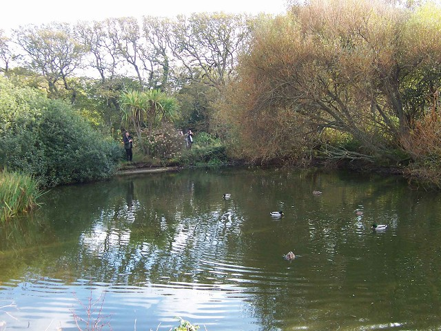 Newford Duck Pond